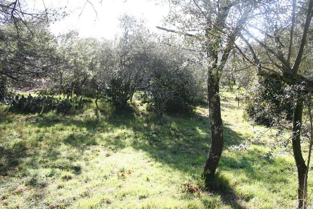 nimes vente terrain joili vue (3)